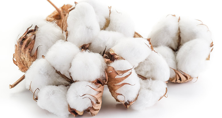 cotton-linter-for-Sodium-Carboxymethyl-Cellulose